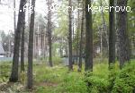 Земля в сосновом лесу + дом (недострой). Продажа. ... Участок ПРОДАН. Архив 2017.